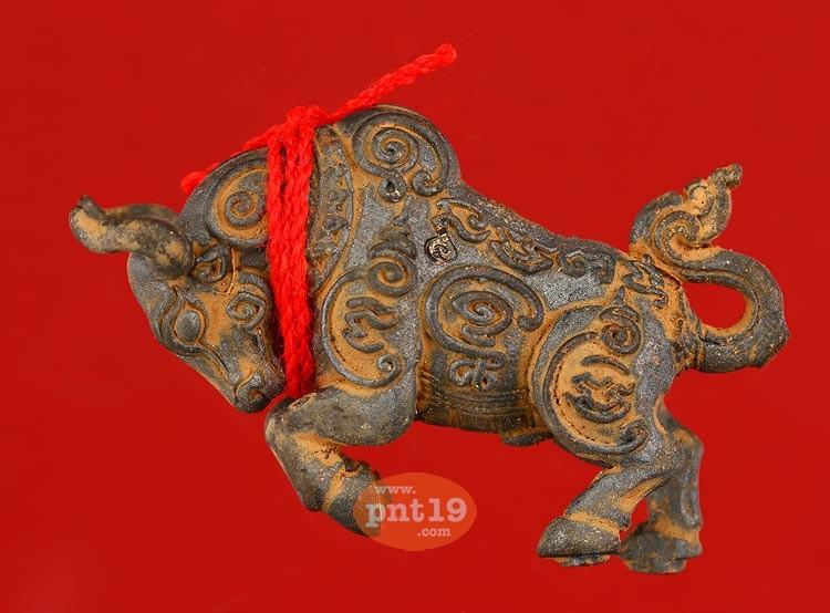 วัวตัวครู ผูกเชือกแดง 3 โค้ด เนื้อนวะเทดินไทย หลวงพ่อสุพจน์ วัดศรีทรงธรรม